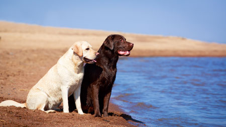 Sharing dog pics with your friends