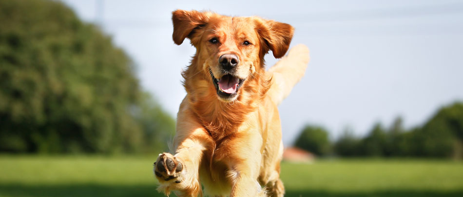 Dog Training Classes - 5 Different Types