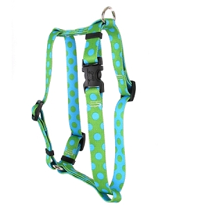 Green and Blue Polka Dot Roman H Harness