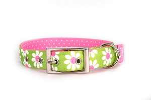 Green Daisy Uptown Collar